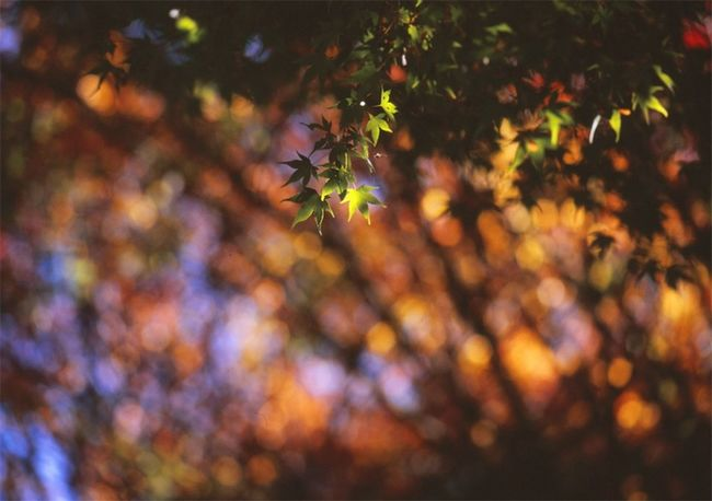 Analogue Photography Film Film Is Not Dead Mamiya Red Autumn Beauty In Nature Branch Film Photography Leaf Medium Format Nature Outdoors Selective Focus Tranquility Tree Velvia