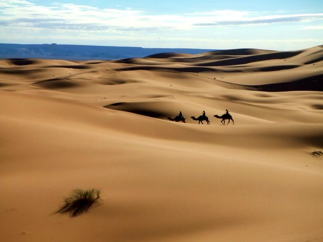 Arid Climate Beauty In Nature Camel Camels Caravan Desert Desert Dune Journey Nature Outdoors Sand Sand Dune Scenics Nature Photography Traveling Travel Photography Nature_collection Animals Animal Photography Touareg People Touareg In The Desert Transportation Travel Animal Themes Connected By Travel