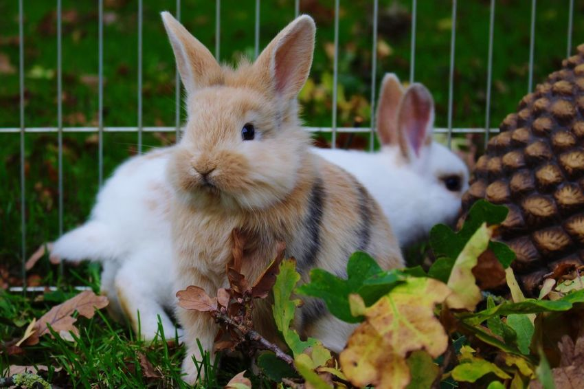 Bunny  Animal Themes Domestic Animals Mammal Pets No People Day Indoors  Close-up Nature