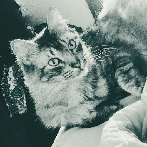 Lua Domestic Cat Domestic Animals Hope Cats Cats Lovers  Cats Lovers  Cats 🐱 Catsagram Cats Lovers  Catslover Catsoneyeem Cats And Dogs Feline Catstagram