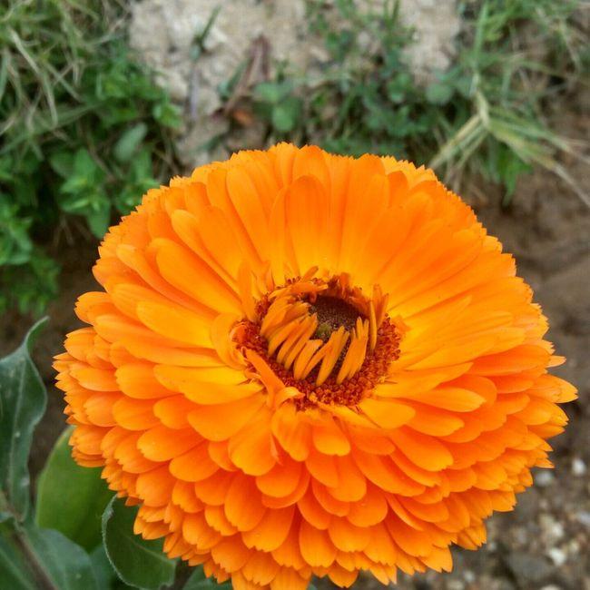 Orange By Motorola University Campus Look What I Found