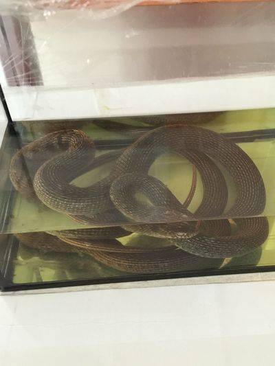 Animals Snake