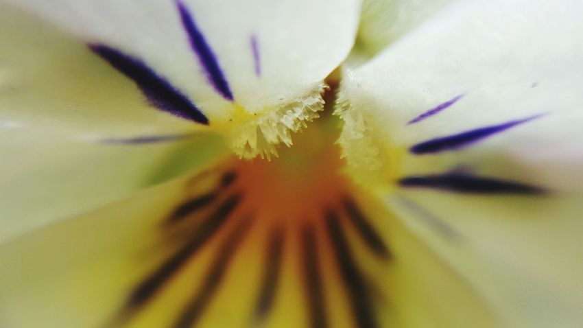 Flower Fragility Freshness Petal Beauty In Nature Single Flower Close-up Growth Flower Head Extreme Close-up Nature Full Frame Macro In Bloom Selective Focus Stamen Pollen Blossom Springtime Botany