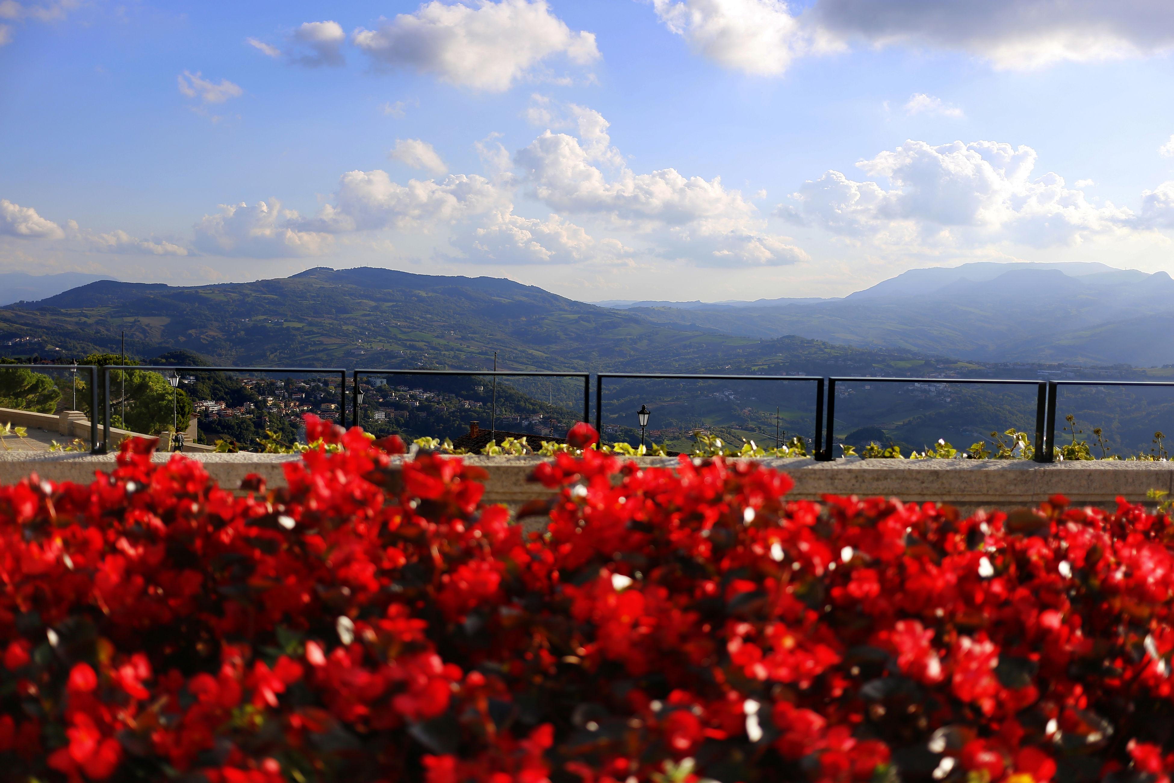 flower, sky, nature, red, beauty in nature, outdoors, no people, cloud - sky, growth, plant, mountain, day, bridge - man made structure, freshness, fragility, close-up, architecture, water