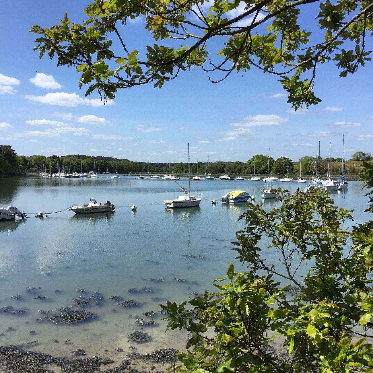 Balade à Presqu'île de Conleau 🌾☀️ IPhone Iphone6 Panoramic Panorama Paysage Morbihan Brittany Bretagnetourisme Bretagne Visitbretagne Jaimelabretagne Amazing