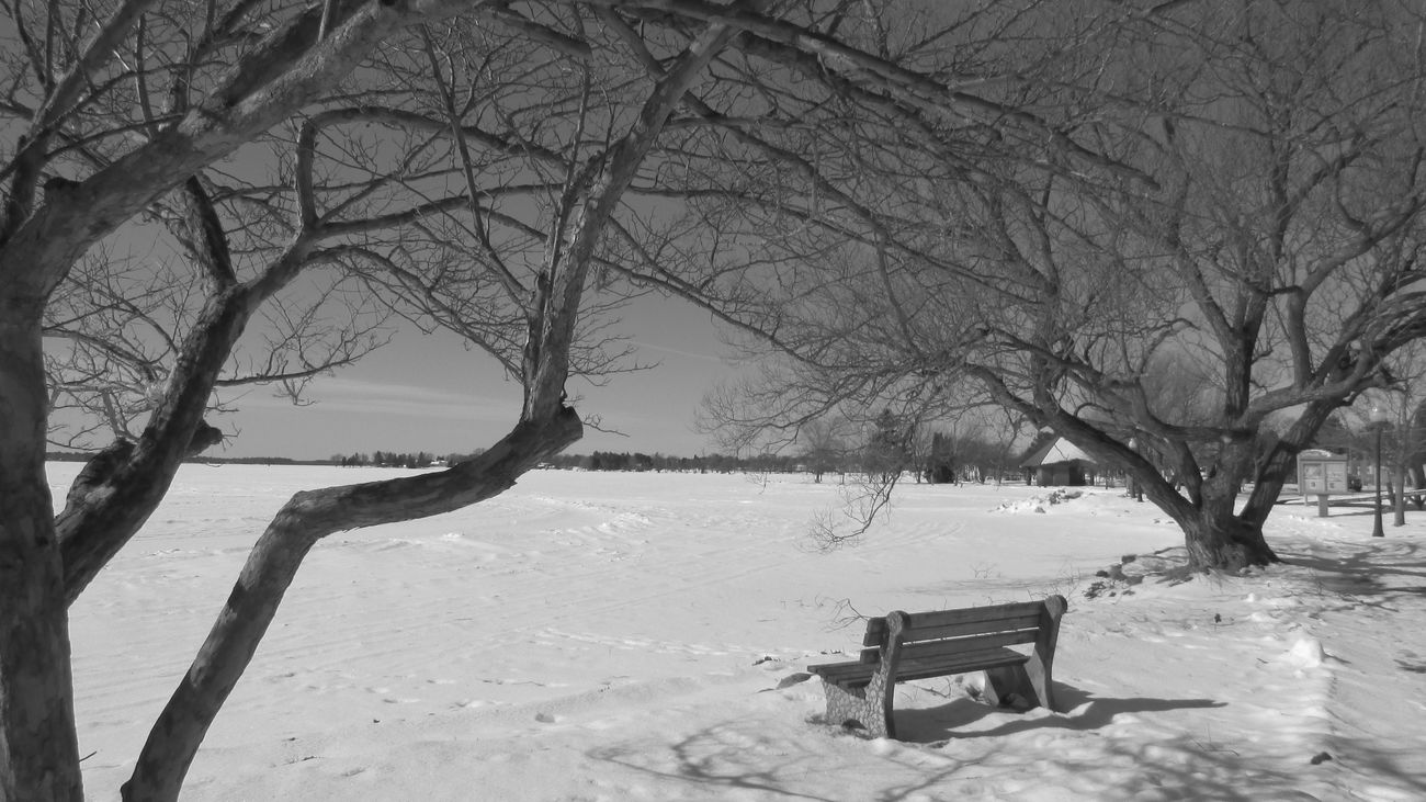 Taking Photos At The Lake Black And White Photography Have A Seat Bare Tree No People Winter Wonderland Lake Cadillac Pure Michigan