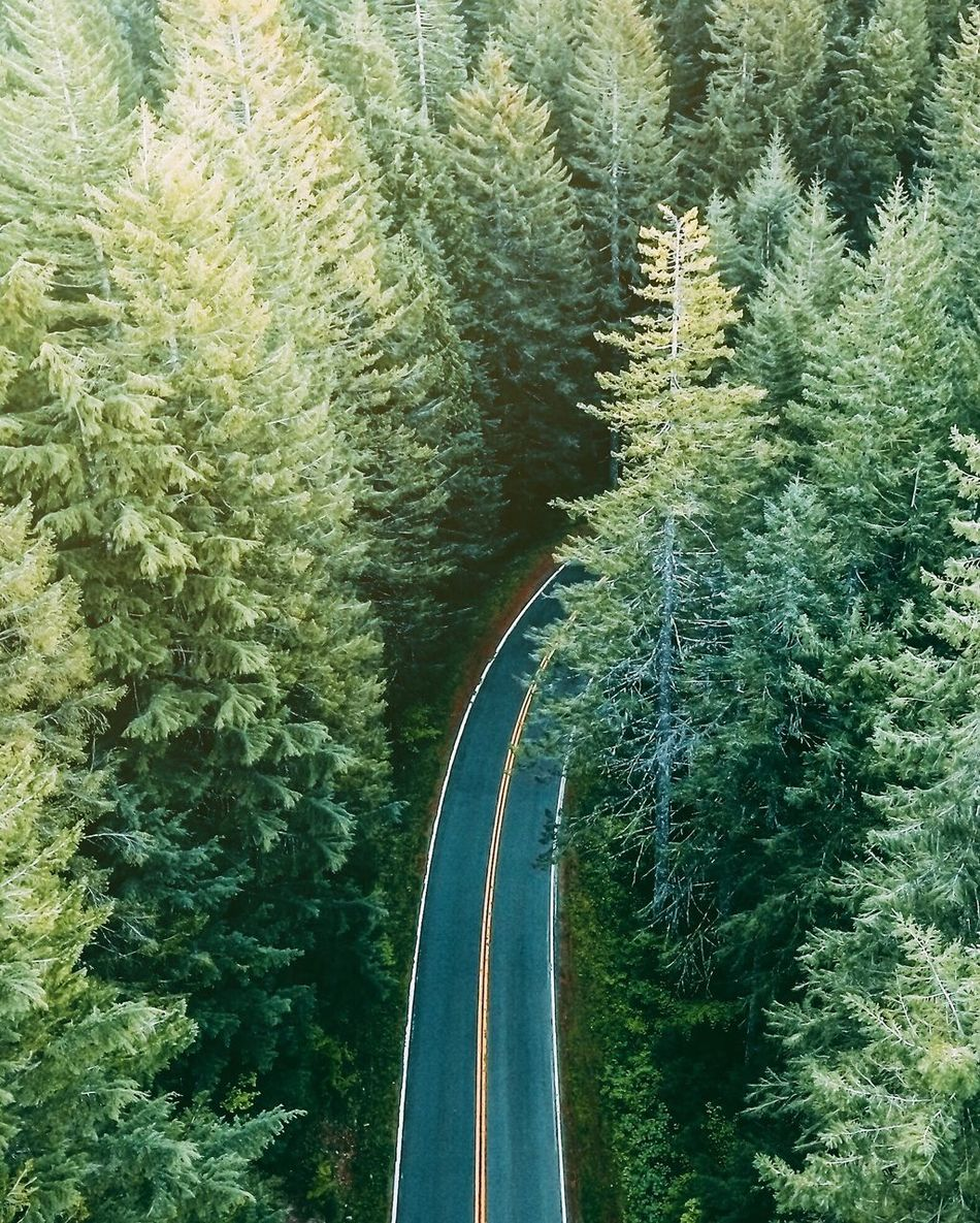 Long roads ahead. Long Goodbye The Way Forward Road Tree Transportation No People Tranquility Beauty In Nature Nature Growth Forest Scenics Outdoors Winding Road Day
