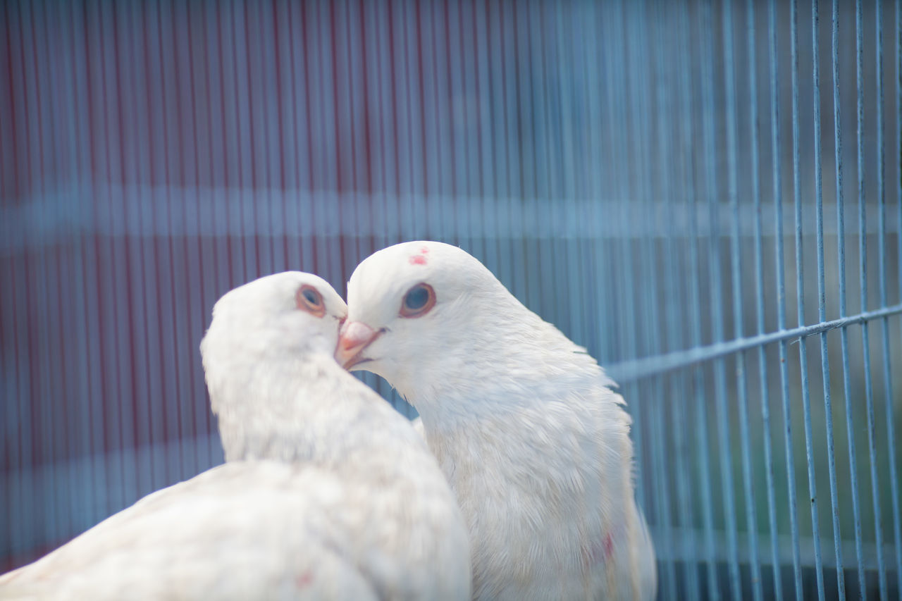 Beautiful stock photos of kiss, Animal Themes, Animals In The Wild, Beauty In Nature, Bird