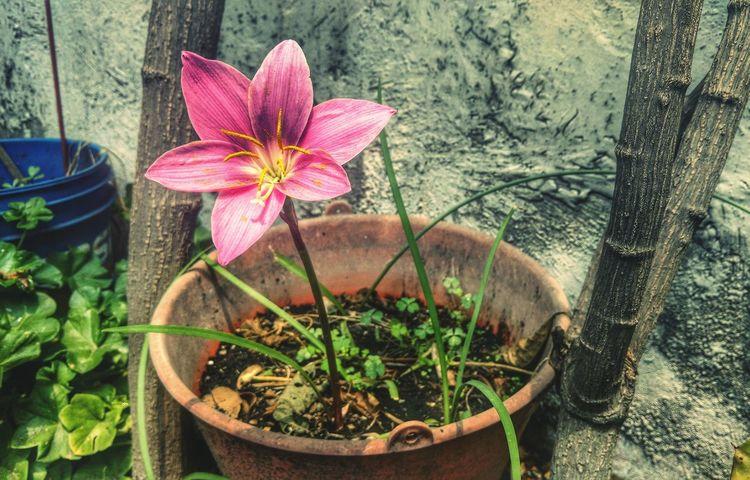 Amo todo lo que tenga que ver contigo...Flowerporn Flowers Flower Nature Macro Pink