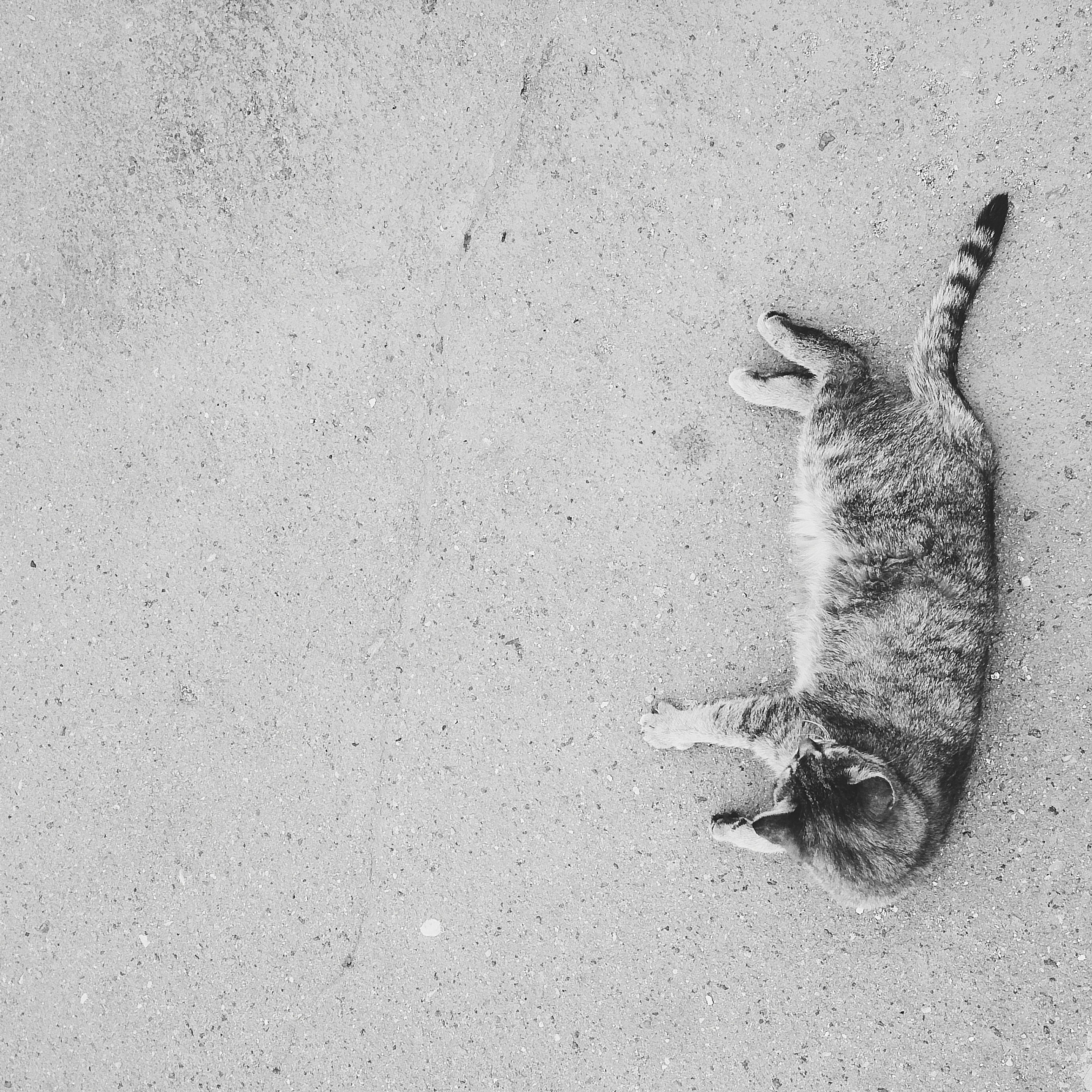 animal themes, one animal, animals in the wild, wildlife, pets, domestic animals, mammal, high angle view, domestic cat, cat, street, dog, day, wall - building feature, zoology, two animals, full length, outdoors, feline, no people