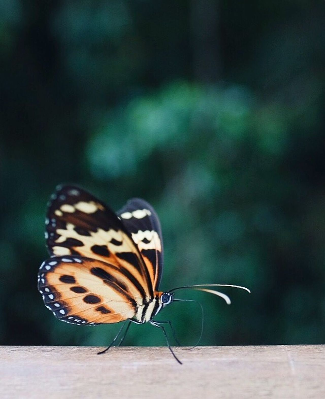 Spread your wings Butterfly - Insect Insect Animal Themes One Animal Animals In The Wild Close-up Focus On Foreground Nature Outdoors Animal Markings Day Full Length No People Butterfly Beauty In Nature Perching