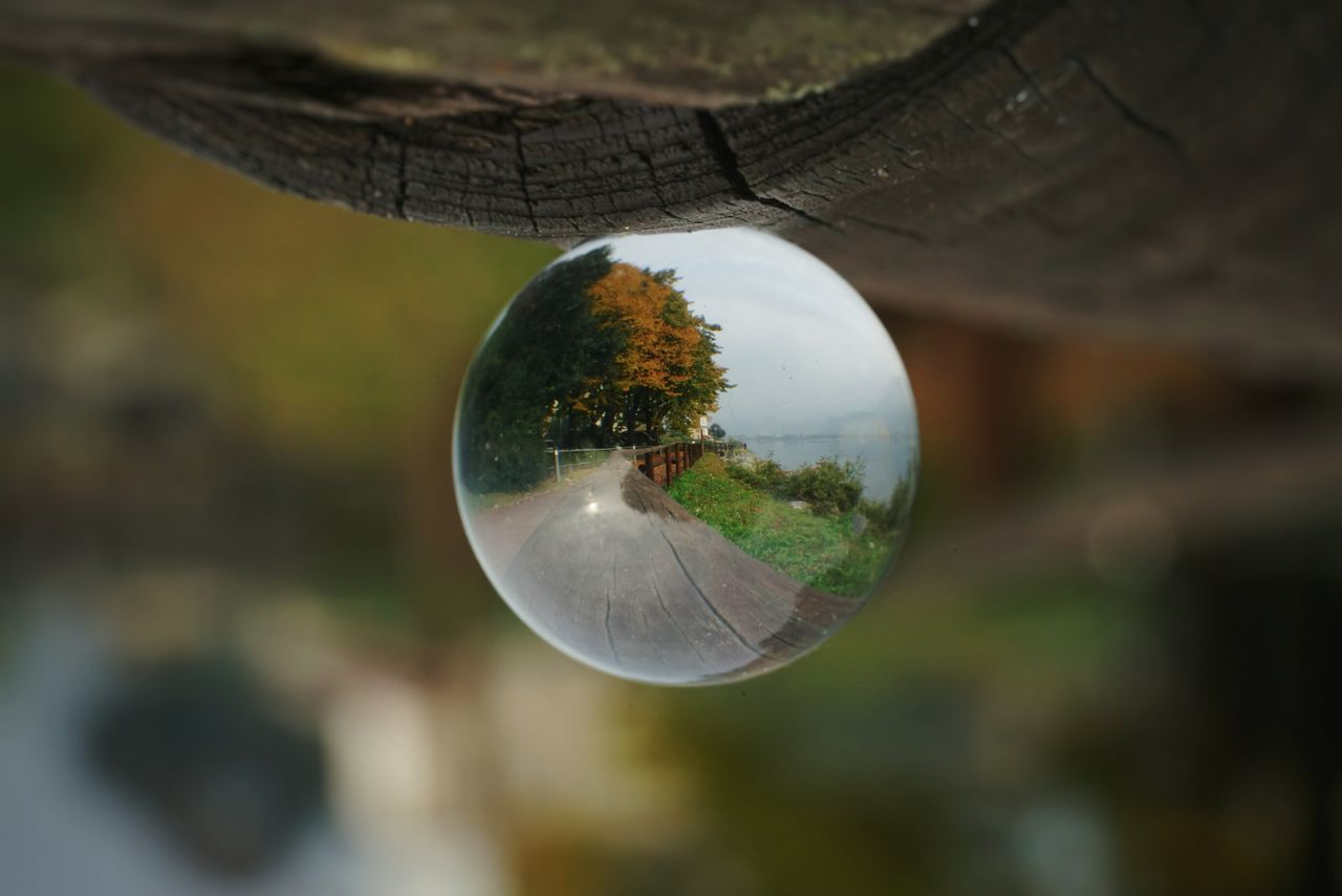 Sphere Tree Selective Focus Close-up Refraction Horizontal Glass - Material Outdoors Day Water Crystal Ball SphereLens Cloudy Sonyalpha Cloud - Sky Sonyphotography Sony α♡Love Full Frame Sony Lake Luca Riva Reflection Sony A7rm2 Sony Pictures 42mpx Mark2