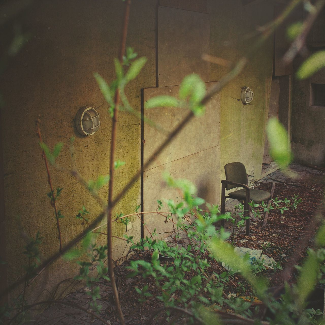 No People Plant Day Leaf Outdoors Nature Chair Lost Lostplaces Hidden Places