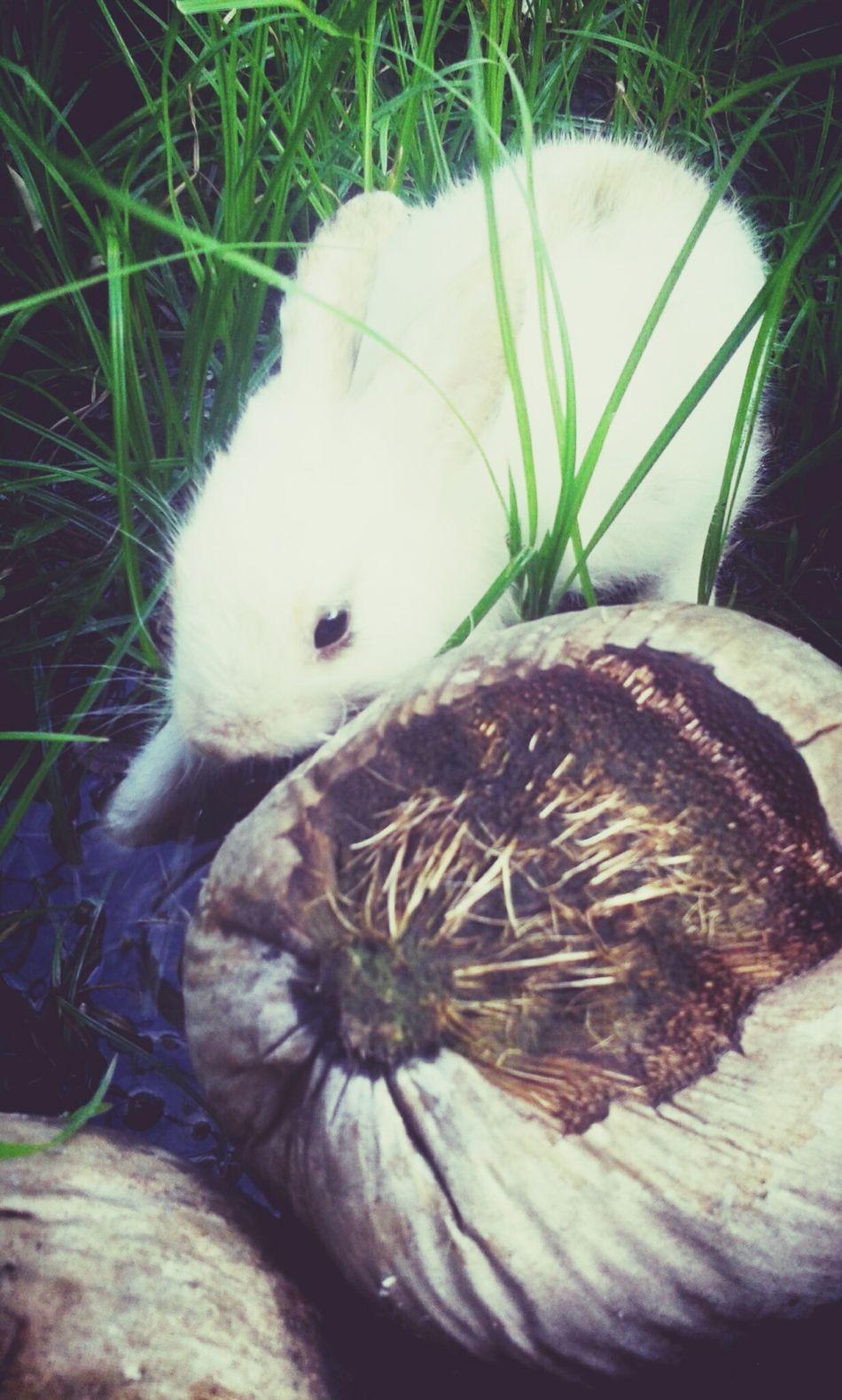 I am an explorer bun ~ Bunny  Bunny Love Pekki
