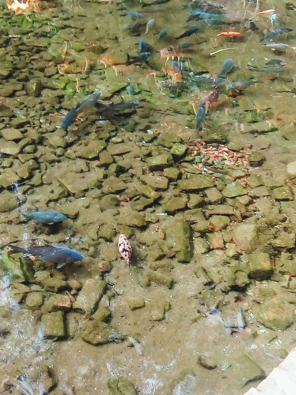Clear Water Fishes Beautiful Pond