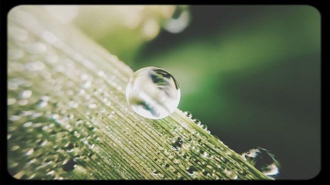 Soreang Hope Morning Dew