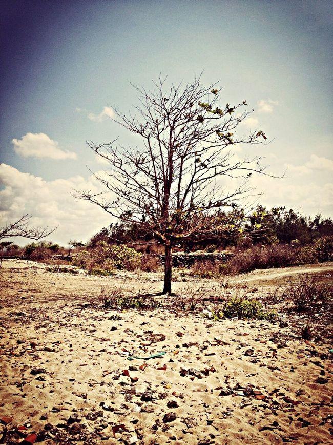 Arid Life Is A Beach Eye Em Nature Lover Trees On The Beach Trees And Sky