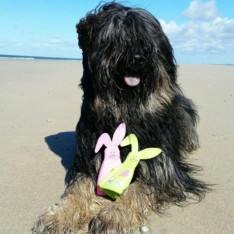 Bentjesgosaugustin Happyeaster Holidays Gos D'atura Beach Nature Landscape Texel  Ilovemydog Mydog