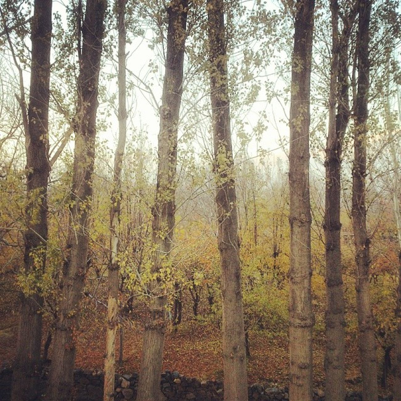 Fall Autumn Trees Hamedan