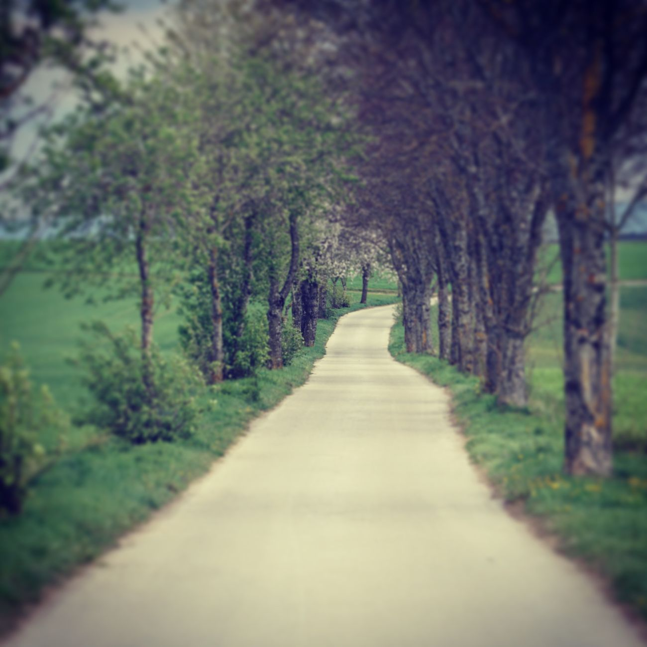 The Way Forward Diminishing Perspective Nature Tree Tranquil Scene Tranquility Beauty In Nature Growth No People Scenics Day Road Outdoors Landscape Forest Freedom DSLR Free 6000 Alpha Sony Beauty