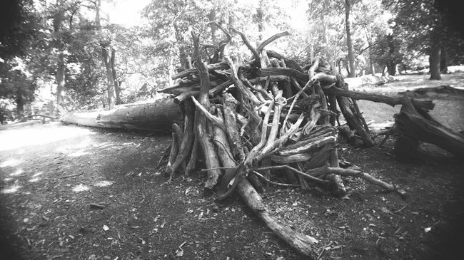 Shades Of Grey Richmond Park, London Branch Tree Stump Tree Trunk Bivouac Fallen Tree