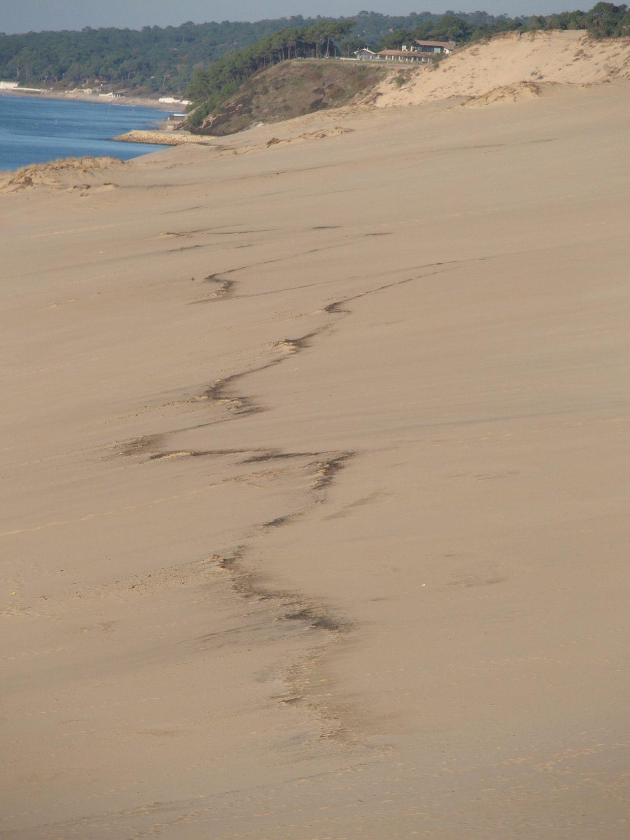 Beach Sea Sand Tranquility Beauty In Nature Water Horizon Over Water No People Dune Dune Du Pilat Arcachon Autumn Colors Dunes Dunedupilat Dunescape Dune Du Pyla Nice Day Outdoors Tranquil Scene
