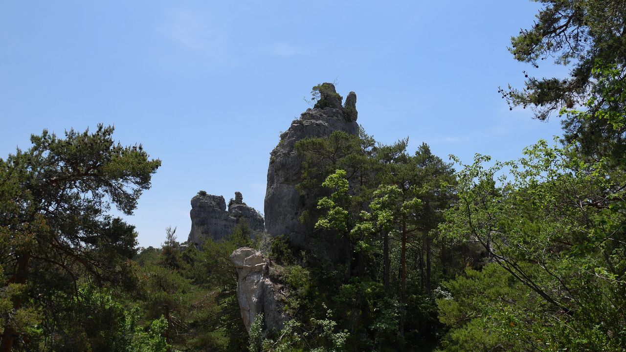Chao Montpellier Le Vieux - Tree Nature Outdoors Sky Beauty In Nature Pine Tree No Filter The Purist (no Edit, No Filter) Nature Photography Rock Formation Naturelovers Occitanie Rock - Object Landscape Nature_collection Aveyron Travel Destinations Natural Beauty Beauty In Nature Nature Forest Tree Tourism