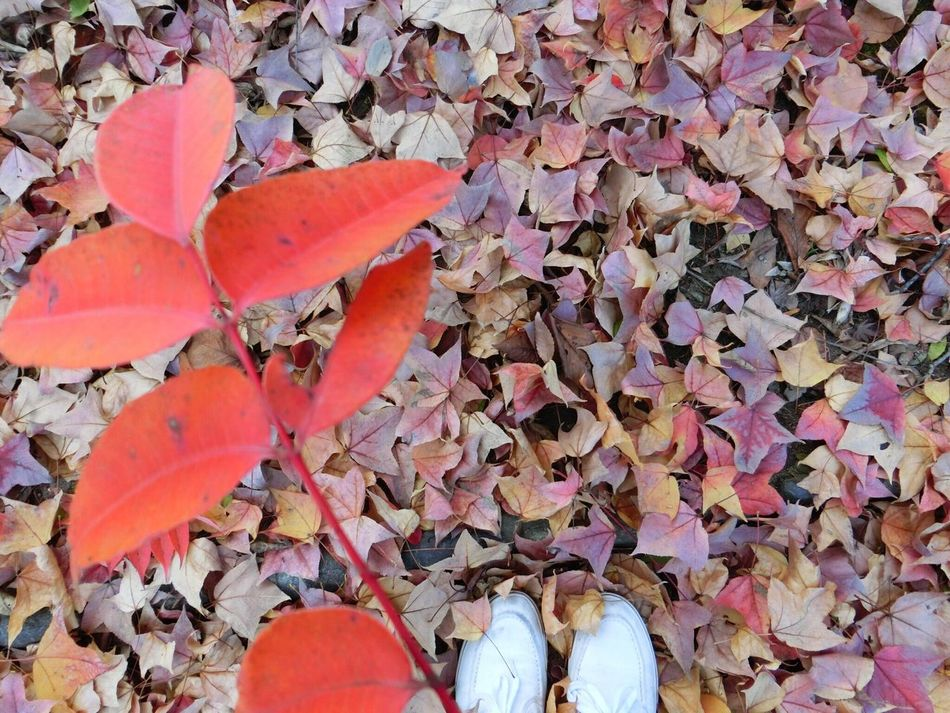 Autumn → Winter Leaf Nature Human Leg Hello World IPhoneography OneYearAgo Walk Okayama Japan 😭😭