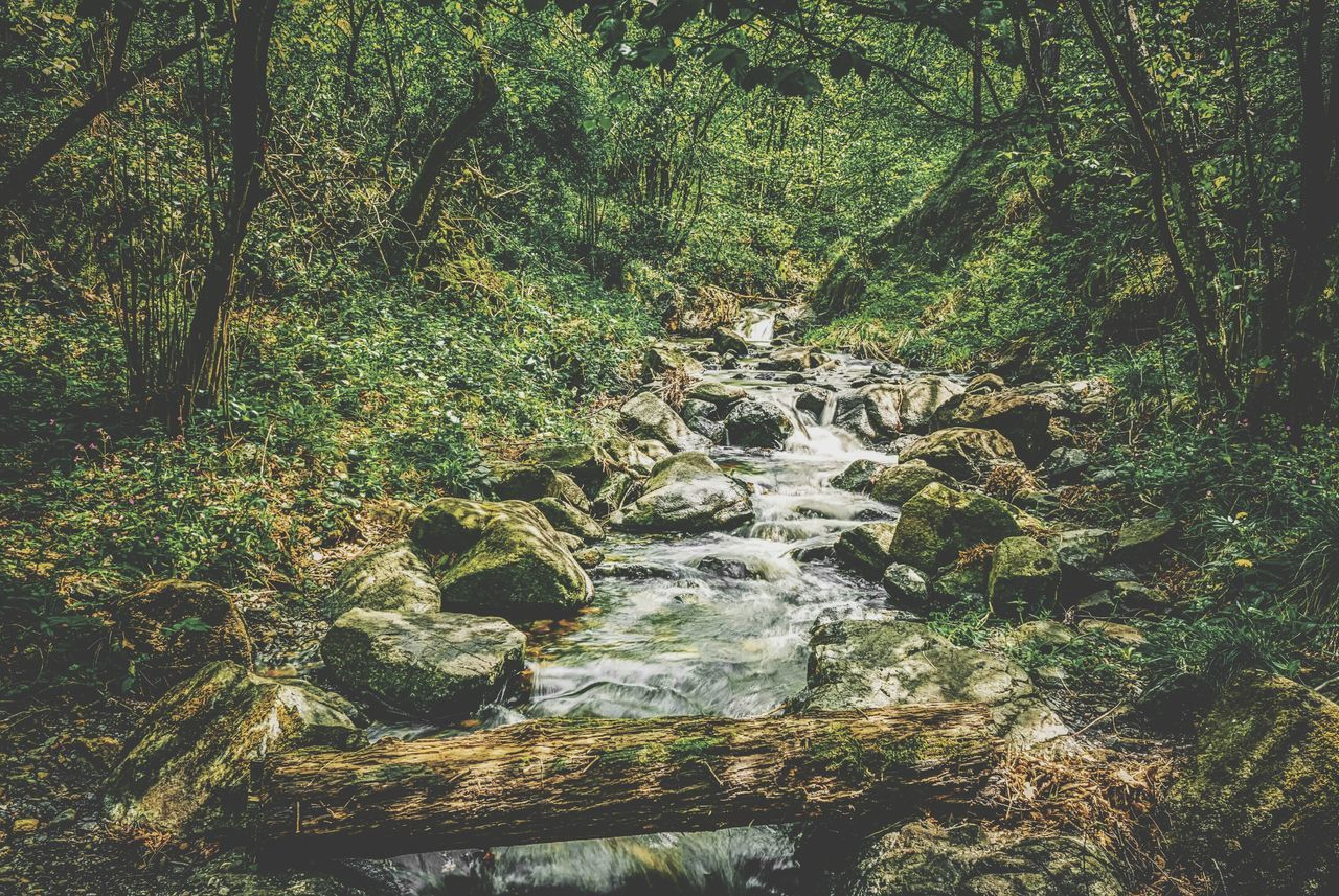 Nature Water No People Outdoors Day Beauty In Nature Backgrounds Full Frame Growth Tree Close-up Beauty In Nature Forest Rural Scene Grass Freshness Landscape Nature Tree Growth Tranquility The Week Of Eyeem