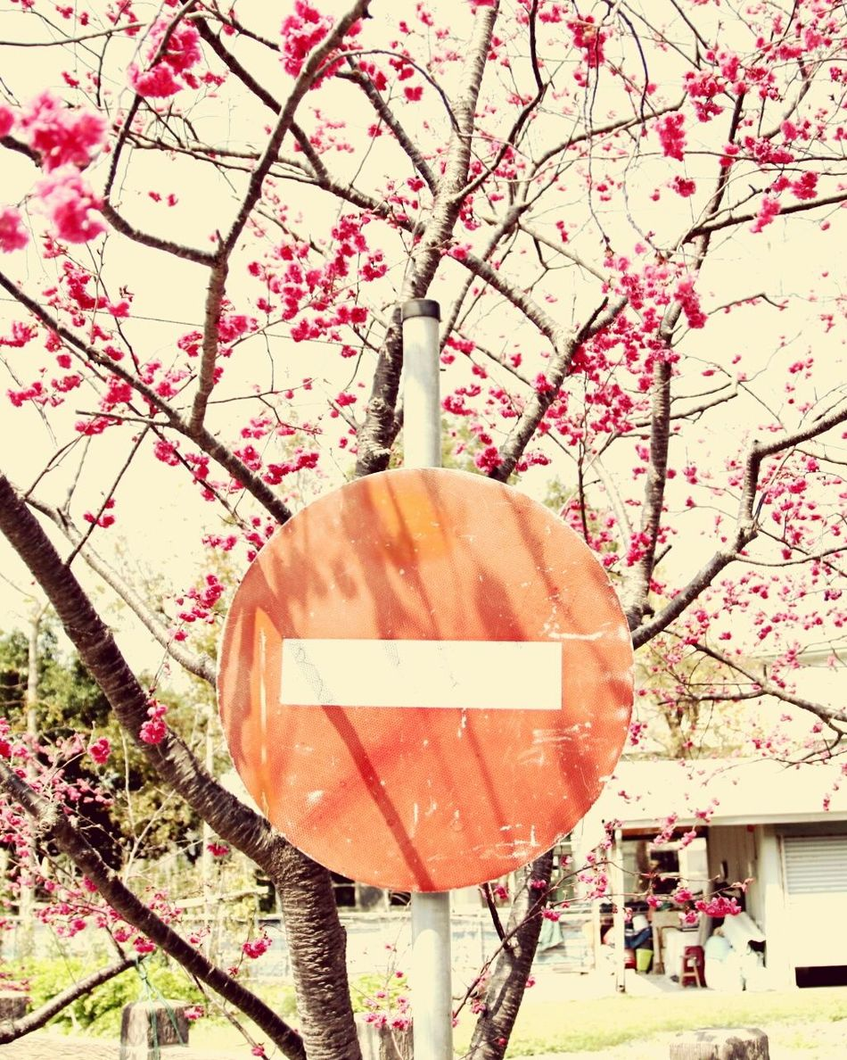 Stop And Stare Stopping Time Stoping Time Stopmotion Stop And Smell The Flowers Stop Stop Sign Tree Sky Outdoors Growth No People Nature Flower Branch Day EyeEmNewHere EyeEm Best Shots EyeEm Best Shots - Nature Beauty In Nature