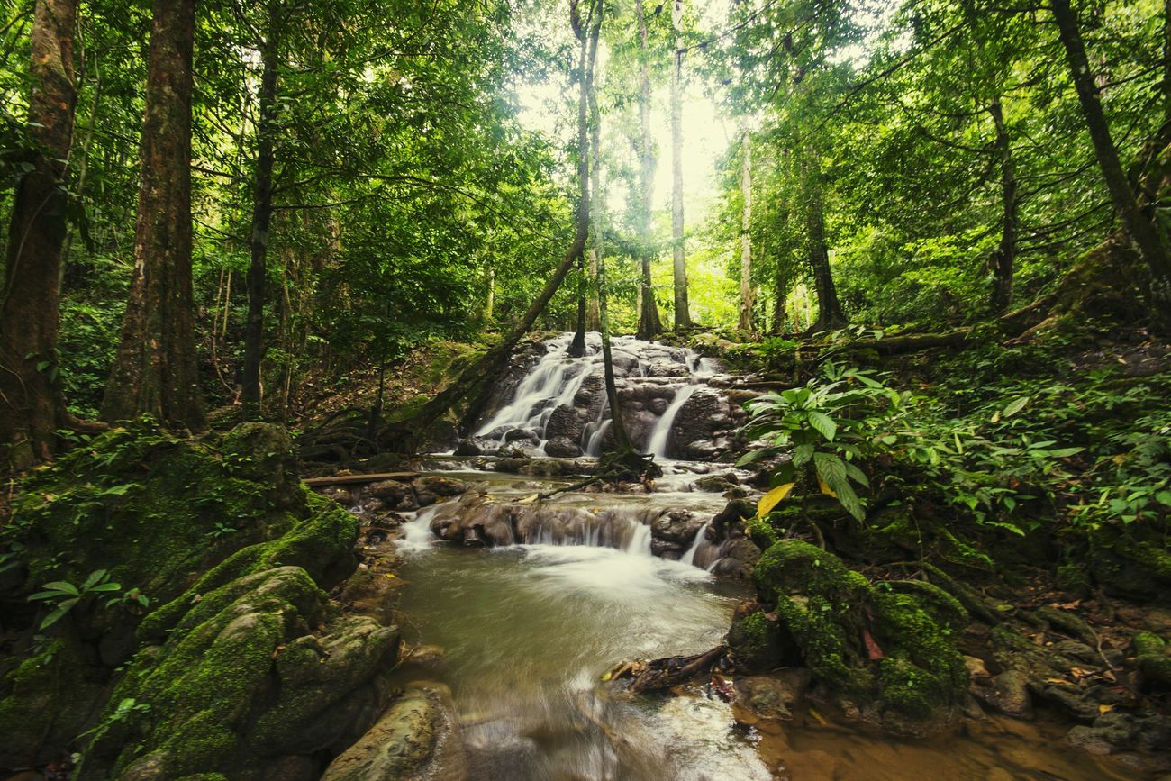 Waterfall Nature Tree Beauty In Nature Tranquility Forest Landscape Water Outdoors Environment Nature_collection Landscape_Collection Green Color Long Exposure Scenics Tranquil Scene Non-urban Scene Growth No People Tree Trunk Motion Day Freshness