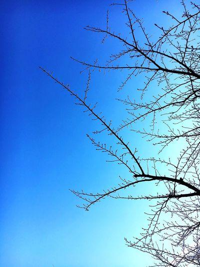 Tree Blue Sky Day Outdoors japan