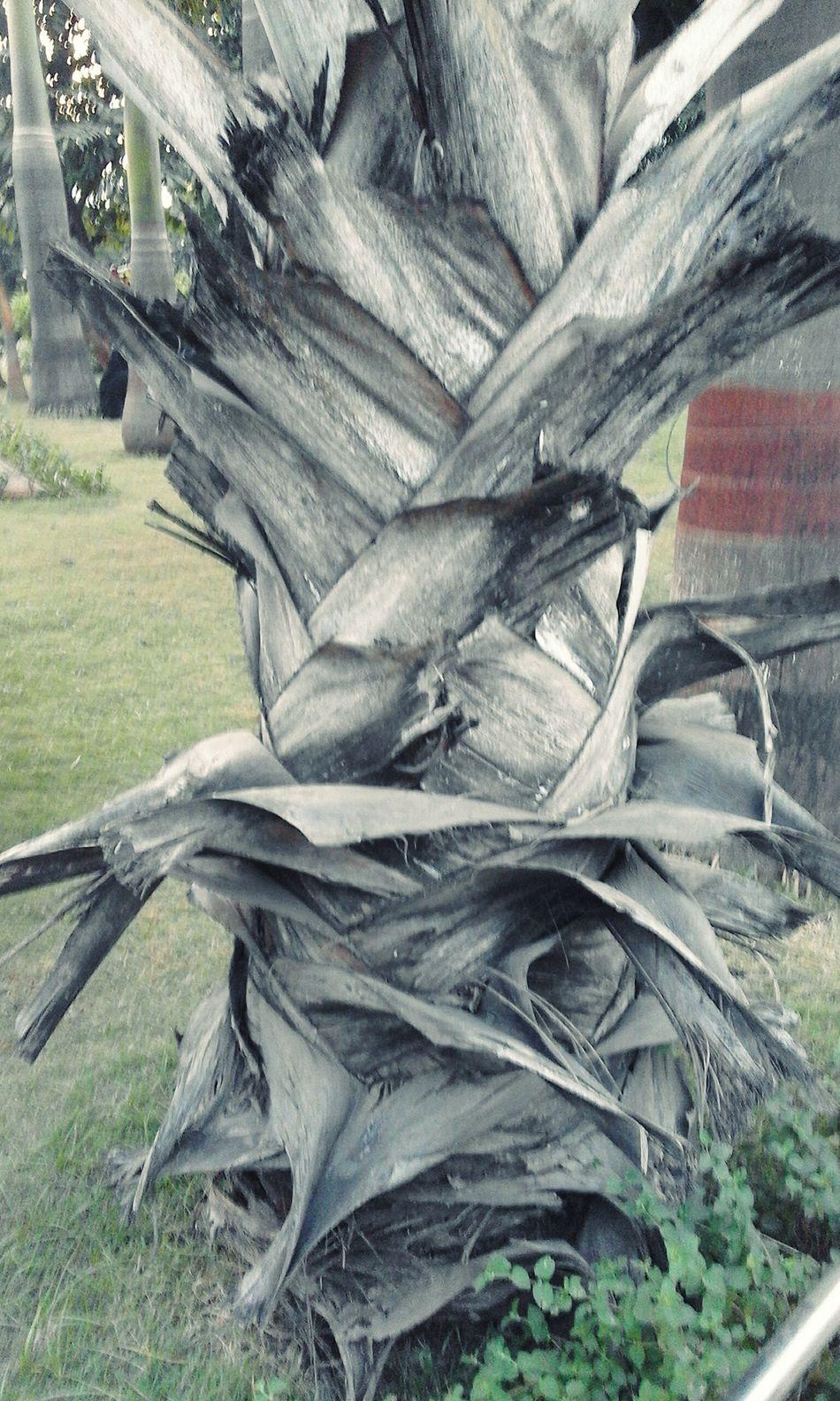 Tree Trunk Nature Treescape Treetastic