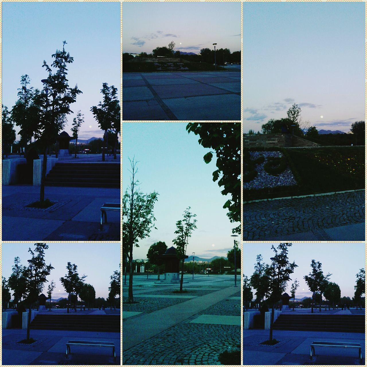 Hugging A Tree Walking Around Moon Moonlight Enjoying The Sun Altinpark Green Tree Relaxing Walking Around Taking Photos Eye4photography  Kolaj Eyemphotography Samsung Samsungphotography EyeEm Nature Lover Like4like Follow4follow EyeEm Best Shots Türkiye 💙💛 Samsungphoto Ankara/turkey Bluelight Cloud