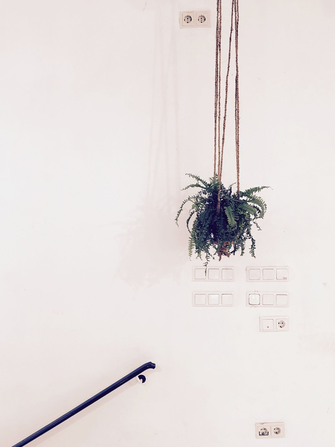 StillLifePhotography Still Life Hanging Plant Switches Sockets Stairways White Wall Interior Design Interior Interior Views Interior Decoration