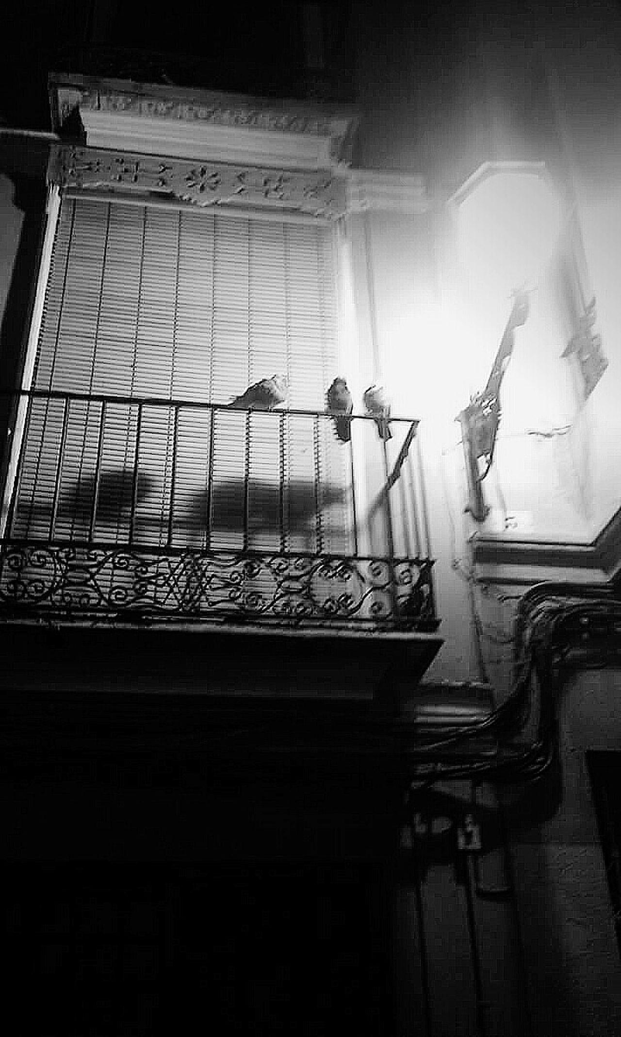 Taking Photos EyeEm Hi! Goodmorning He Visto La Luz Nightlights City Lights Pidgeons No People Darkness And Light Blancoynegro B&w Lamp Lighting Antique Light Springishere Reupload:)