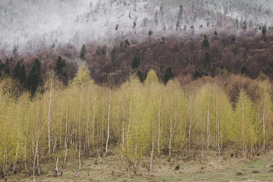Spring on layers Beauty In Nature Countryside Forest Growth Landscape Mountains Nature No People Outdoors Romania Tranquility Tree EyeEm Diversity