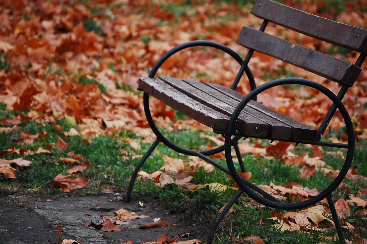 Benches & Branches Park Leafes
