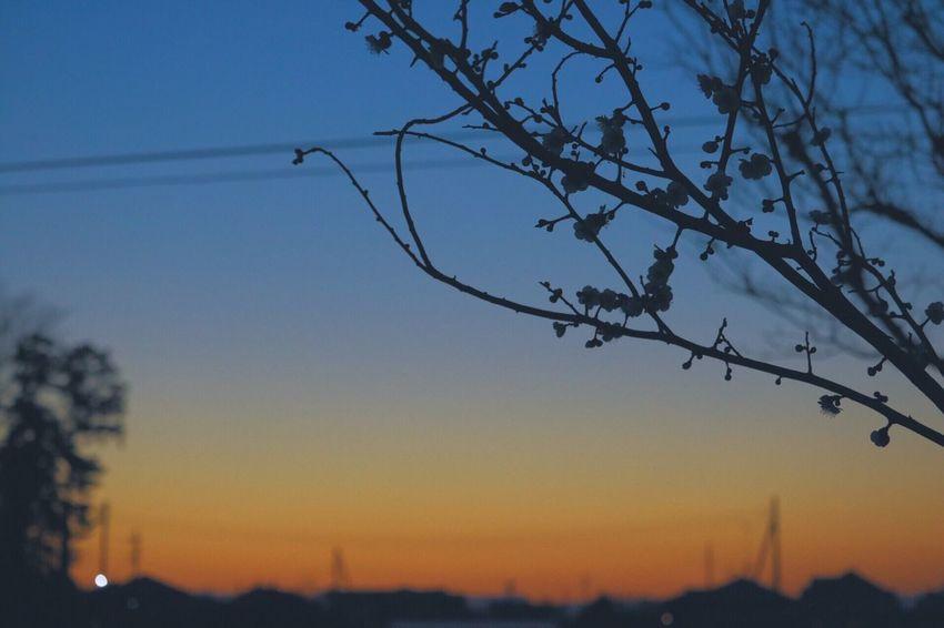EyeEm Nature Lover Nature Photography Naturelover Plum Sky Majichour Sunset Sunset #sun #clouds #skylovers #sky #nature #beautifulinnature #naturalbeauty #photography #landscape Canoneos8000d Canonphotography VSCO