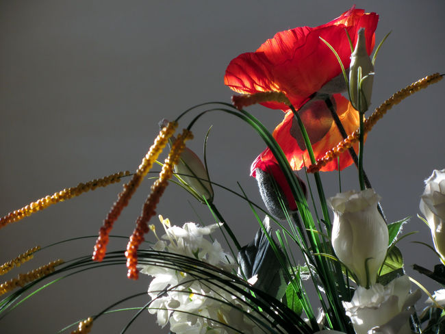 Composition of white roses and red poppies in the early morning light Arranging Blossom Bouquet Bunch Celebration Centrepiece Centrotavola Composition Decor Decorating Event Flower Flower Arrangement Flower Head Holiday Holidays And Celebrations Illuminated Petal Red Red Poppies Season  Setting Still Life Symbol White Rose
