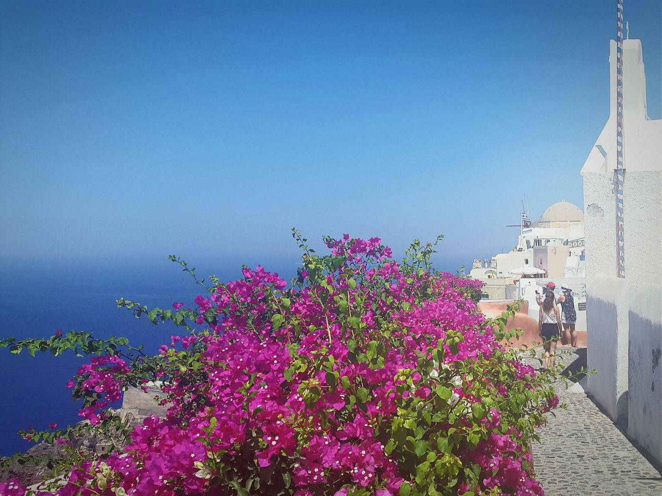 Oia Santorini Santorini, Greece Santorini Island Greece Flowers Flowerpower Seaside Holiday Sunny Day