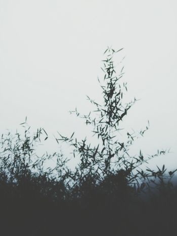 Winter Snow No People Nature Plant Tree Outdoors Day Cold Temperature Silhouette Landscape Animals In The Wild Sky Close-up