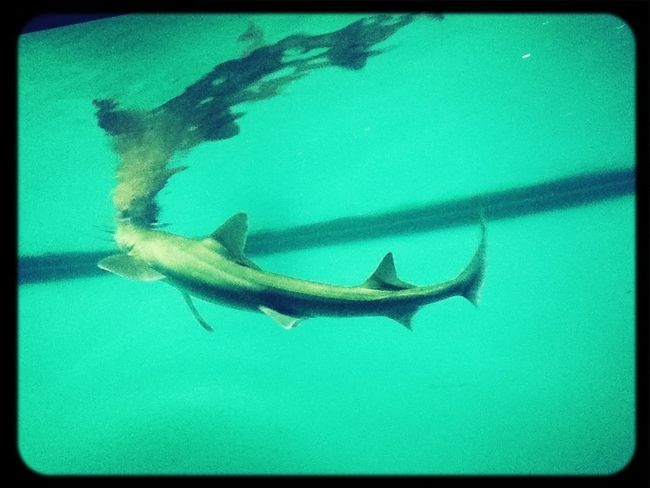 Check This Out Shark Awesome :)
