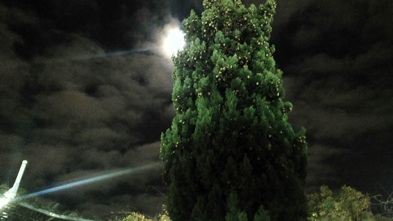 Tree Nature No People Outdoors Illuminated Night Clouds Green Color Scenics Beauty In Nature Sky