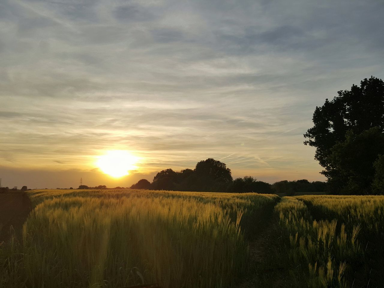 sunset, field, tranquil scene, landscape, tranquility, nature, agriculture, scenics, sky, beauty in nature, tree, rural scene, growth, no people, outdoors, grass, silhouette, plant, day