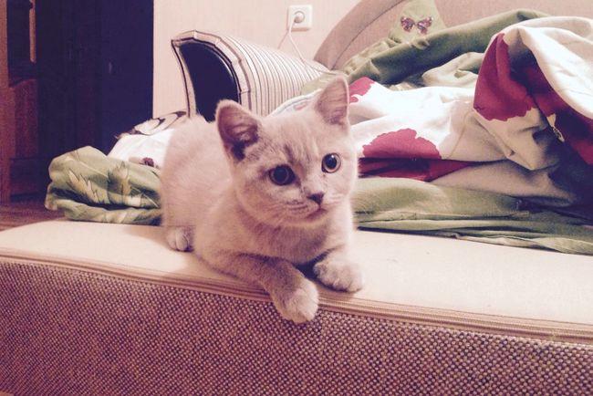 My Little Cat☺