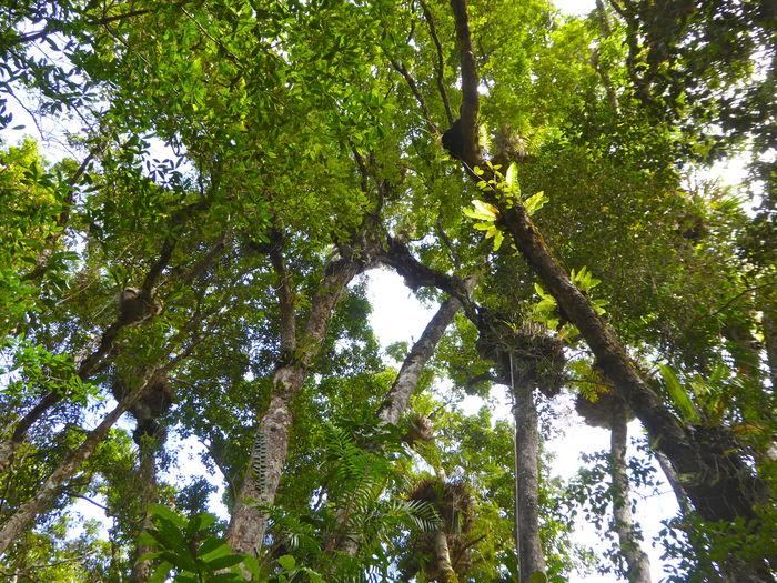 Beauty In Nature Botanical Branch Green Color Growth Holidays Jungle Jungle Botanic Jungle Canopy Lush - Description Nature Outdoors Parasite Plants Scenics Tourist Destination Tranquility