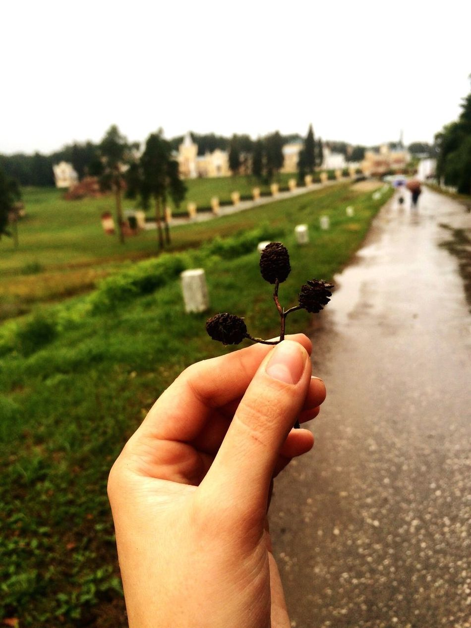 Human Hand Lifestyles Plant Nature Beauty In Nature