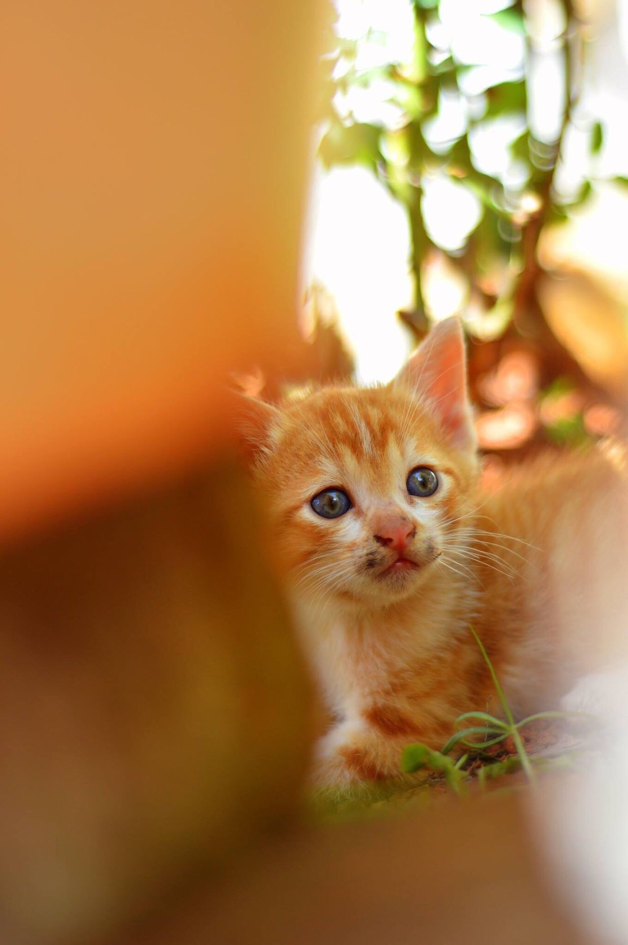 My cute baby cat 😘😍😘 Pet Animal Animal Themes Cute Babycat Kitten