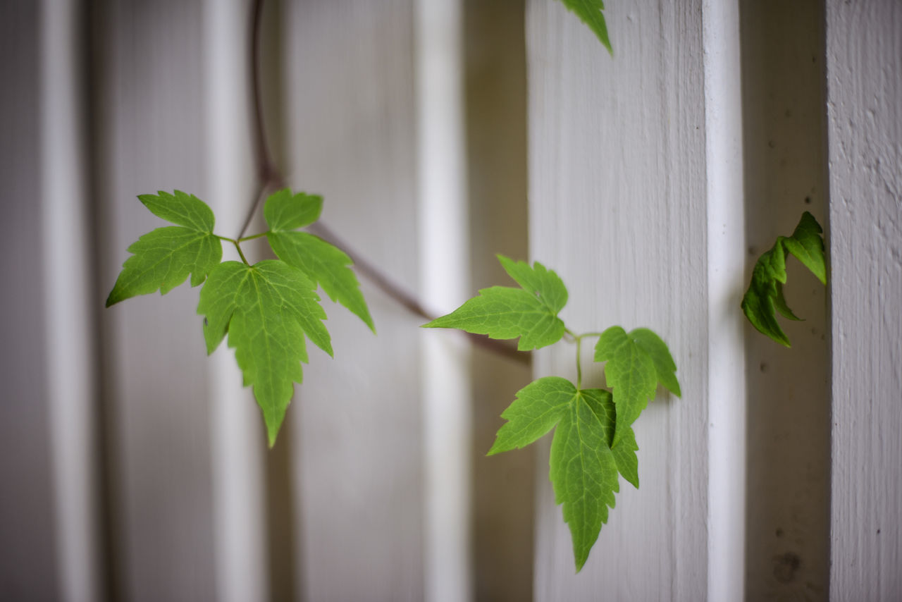 Close-Up Of Plant Growing By Wooden Fence